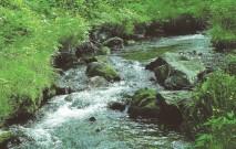 古い記事: 美肌にデトックス効果……鹿児島は美しくなれる水の宝庫!