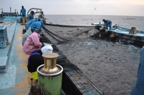 定置網の様子。漁は海との真剣勝負で迫力満点。
