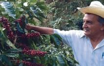 古い記事: コーヒー栽培にも、情熱と愛は欠かせない…