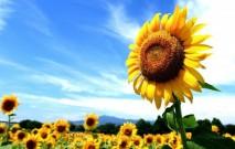 古い記事: 紫外線ケア&美白アイテムをPick up!この季節の必需品で