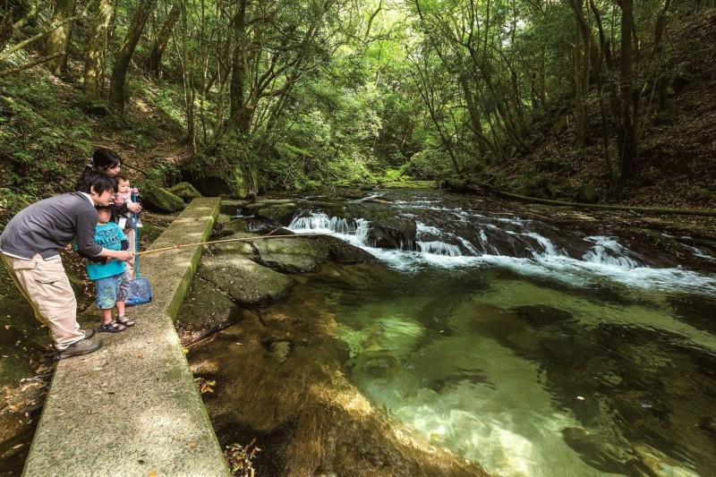 緑に囲まれた渓流でニジマス釣りを楽しめる