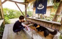 古い記事: 愛犬と一緒に楽しめる鹿児島方面のスポット4選。温泉や宿泊もあ