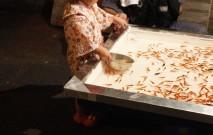 古い記事: 観賞魚と飼育セットをPick up!夏を涼しく演出しましょう