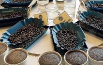 古い記事: プロのワザ!テイスティングで美味しいコーヒーを見極める