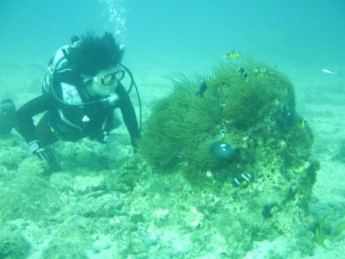 驚くような透明度の海に住む、美しい魚たちに会いに行こう!