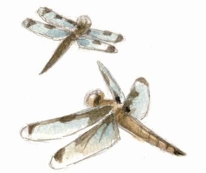 国内希少野生動植物種のベッコウトンボ
