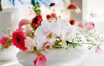 古い記事: 花を通じてお客様を幸せに― | Mstyleの花あそび/1月