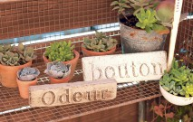 古い記事: 植物とオーナメント組み合わせて
