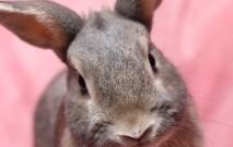古い記事: 動物がモチーフのユニークアイテムをPick up!