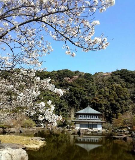 (写真提供:南九州市)