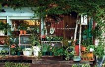 古い記事: 知識のないOLが、いきなり花屋になりました | 街のお花屋さ