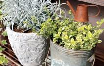古い記事: グリーンと始める新生活。暮らしの中に癒しの植物たち