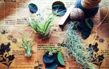 古い記事: お花のデリバリーという名の商品と共に | 街のお花屋さん