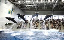 古い記事: かごしま水族館 | イルカショーの後は近隣グルメ(鹿児島市本