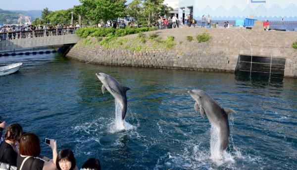 かごしま水族館から錦江湾につながる屋外の「イルカ水路」