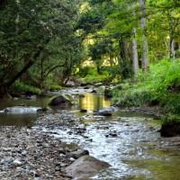 渓流沿いの遊歩道でウォーキングを楽しむ