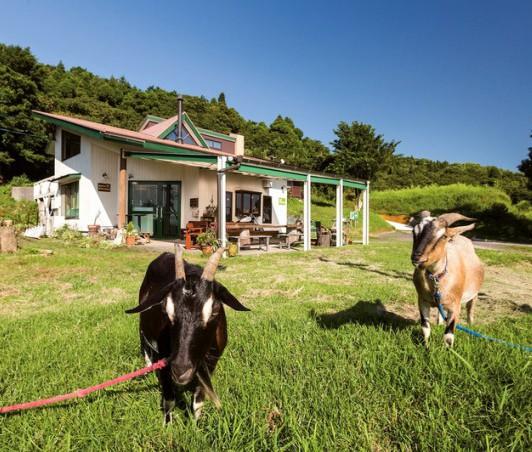 敷地ではヤギ2頭が草を食べる姿も見られる
