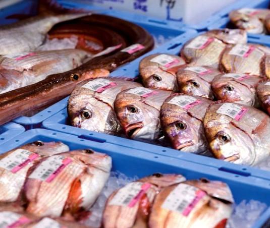 新鮮な地魚が豊富に並ぶ
