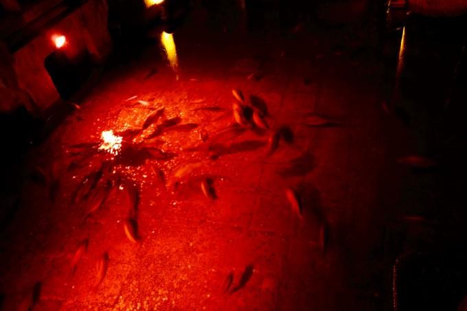 東ローマ帝国の大貯水槽を泳ぐ魚ちゃん