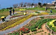 古い記事: 長島町   絶景スポットや海山の幸に魅了される