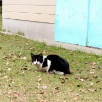 照島神社付近のネコ