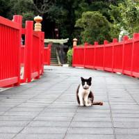 照島神社のネコ