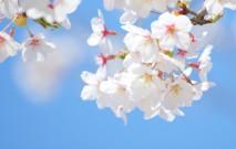 古い記事: 季節を運ぶ花々と共に仕事をする | 街のお花屋さん