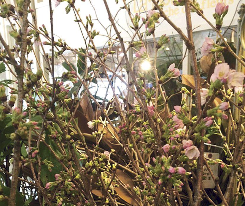 *花束・アレンジメントをご予算に応じてお作りします。 *旧鹿児島市内は3000円以上無料配達いたします。