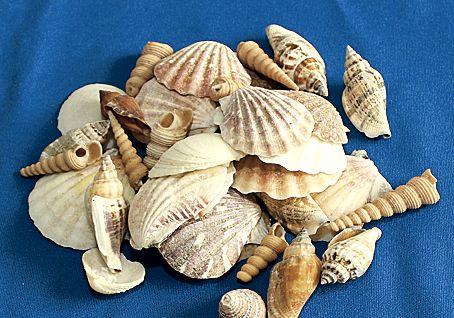 インテリアのポイントに貝殻詰め合わせ