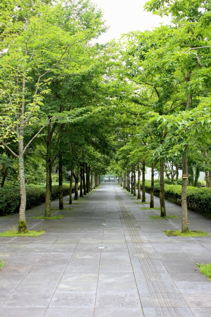 入口に向かうコブシ並木もアート作品の一部