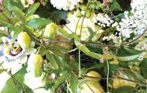 古い記事: 暑さを癒やす白×グリーン | 街のお花屋さん~Fleur15