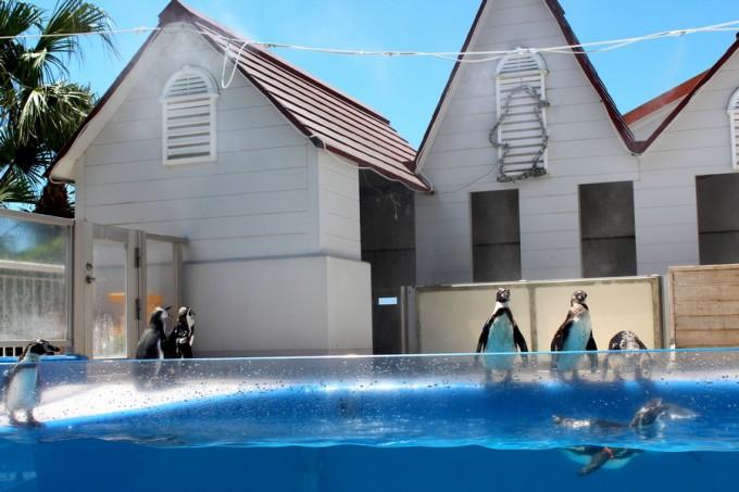 志布志湾イルカランドのペンギン