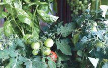 古い記事: 夏を味わう、ゆるやかな時間 | 街のお花屋さん