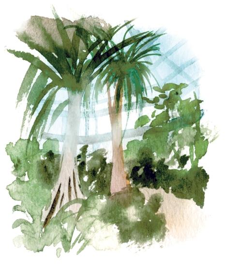 珍しい植物が生い茂る温室