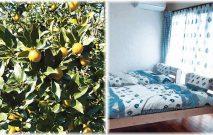 古い記事: オレンジパーク串良 | 民宿天豆(そらまめ)/鹿児島バリアフ