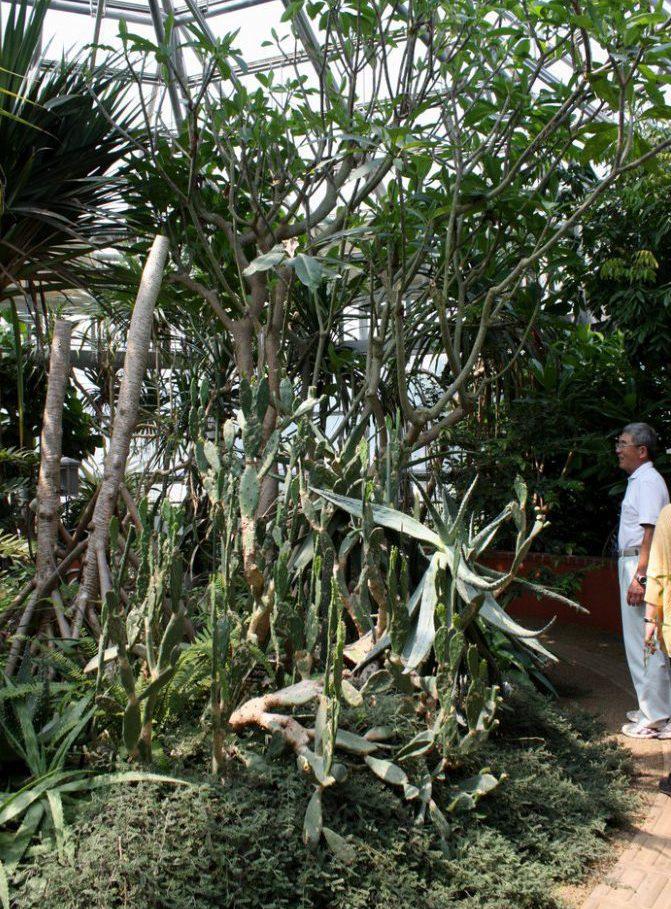 薬草・地域作物センターの植物園