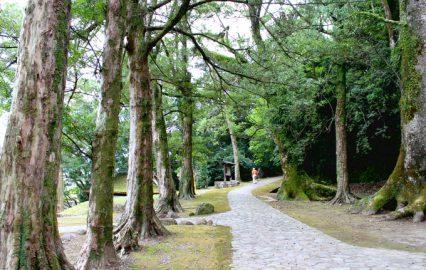 いにしへの道と呼ばれる竹田神社の並木道