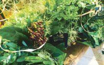 古い記事: 秋を運んでくれる植物たち | 街のお花屋さん