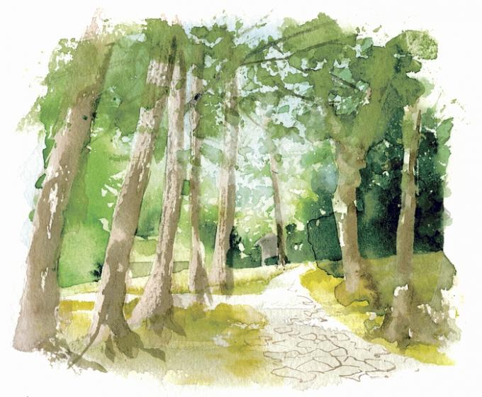 静寂に包まれるイヌマキの並木道イラスト