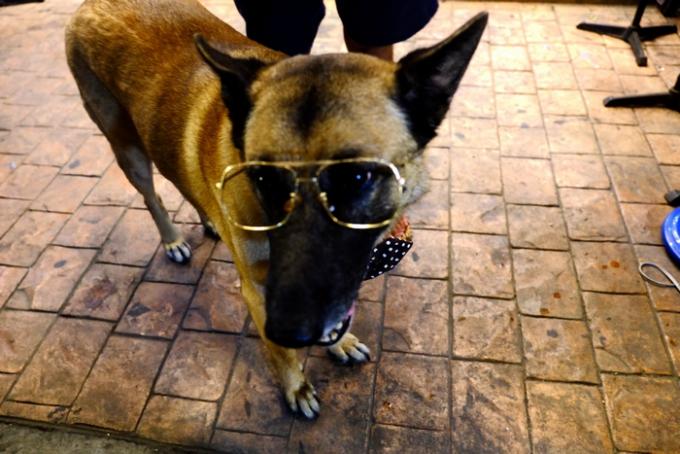 チェンマイのサンデーマーケットのオシャレな犬