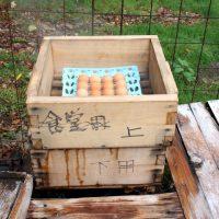 白鳥温泉の温泉卵