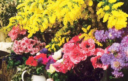 古い記事: ミモザは3月8日「国際女性の日」のシンボル | 街のお花屋さ