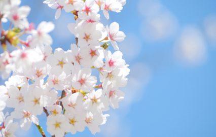 古い記事: 春満開☆桜コレクション人気TOP3。春気分で毎日を