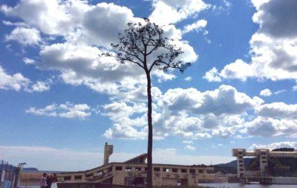 古い記事: 陸前高田に残る奇跡の一本松の『魂』を継承させたい