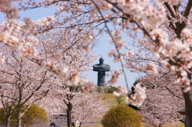 弥五郎伝説の里の桜