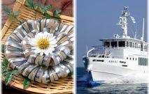 甑島名物キビナゴ料理と高速船 甑島