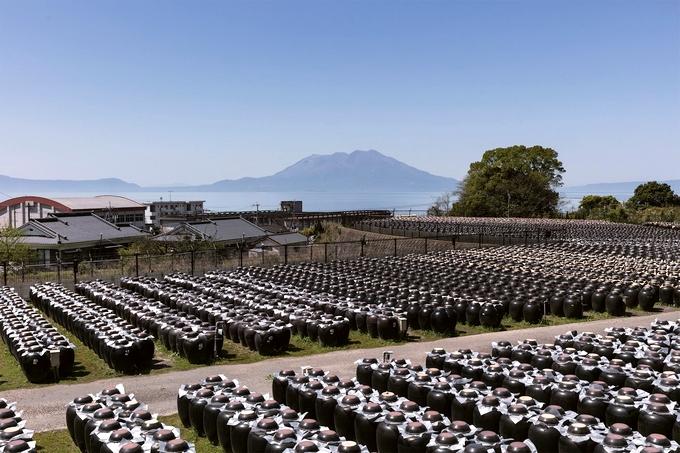 黒酢の壺畑と桜島
