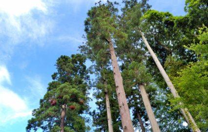 古い記事: 木だって、混雑している「満員電車」状態は苦手なの