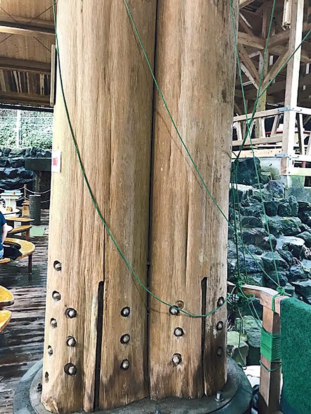 唐船峡 スギの柱