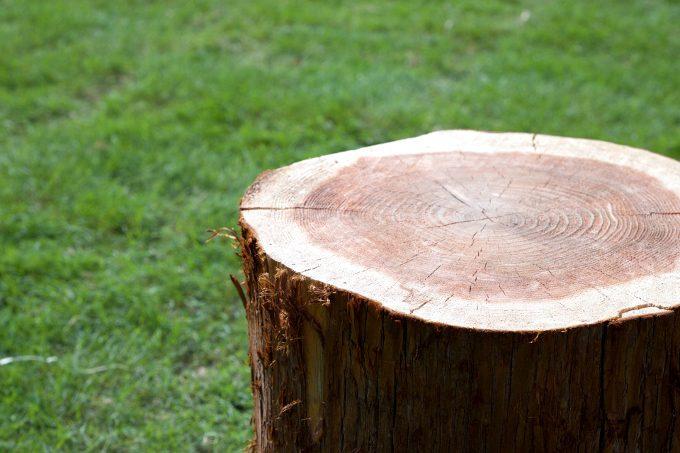 木になる話_木材の模様
